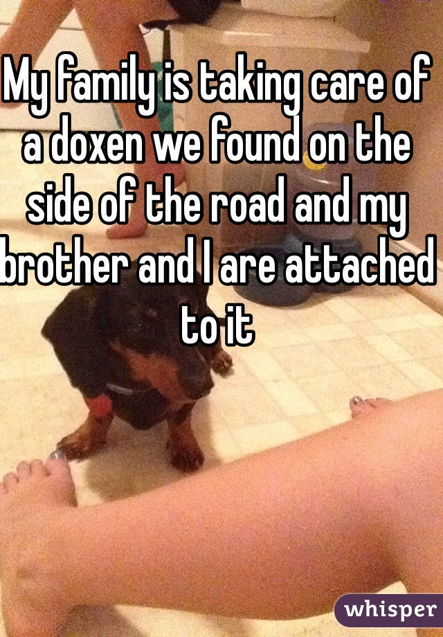 My family is taking care of a doxen we found on the side of the road and my brother and I are attached to it