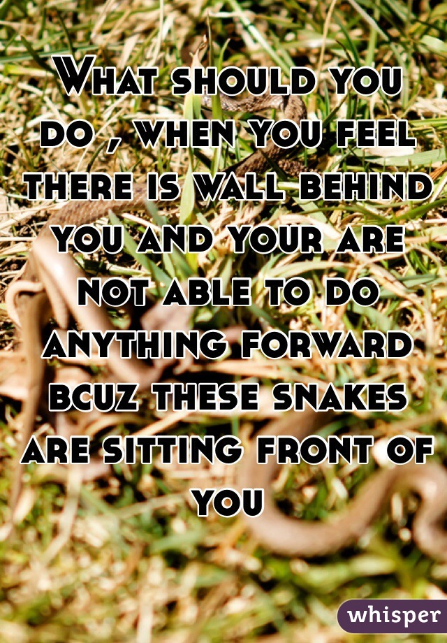 What should you do , when you feel there is wall behind you and your are not able to do anything forward bcuz these snakes are sitting front of you