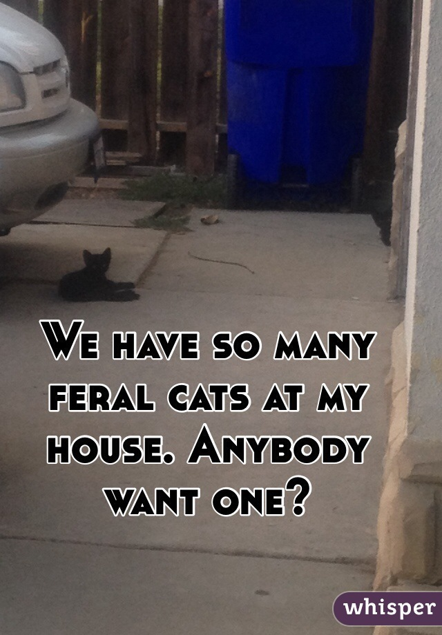 We have so many feral cats at my house. Anybody want one?