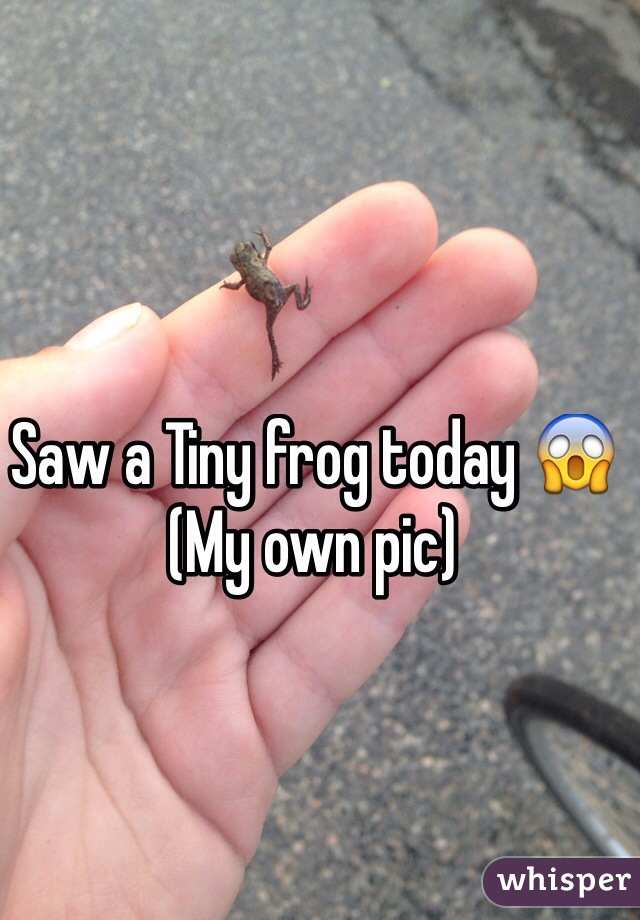 Saw a Tiny frog today 😱 (My own pic)