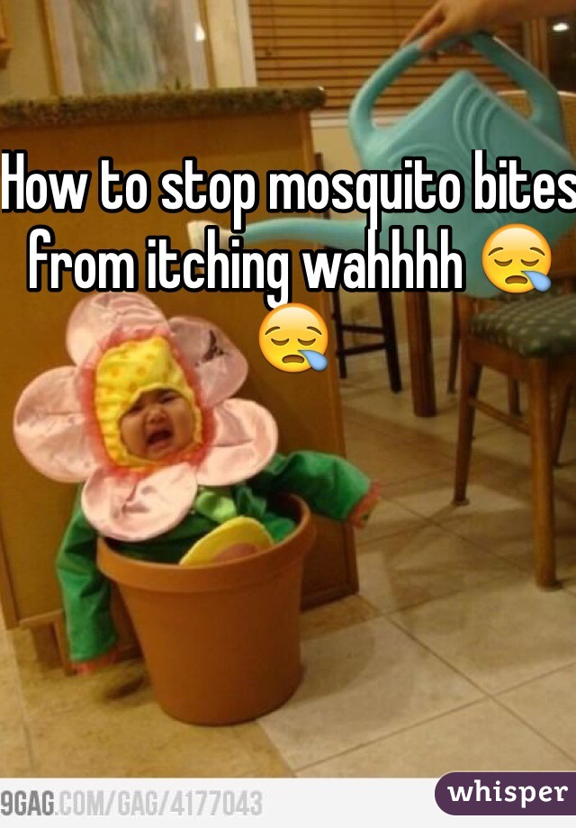 How to stop mosquito bites from itching wahhhh 😪😪