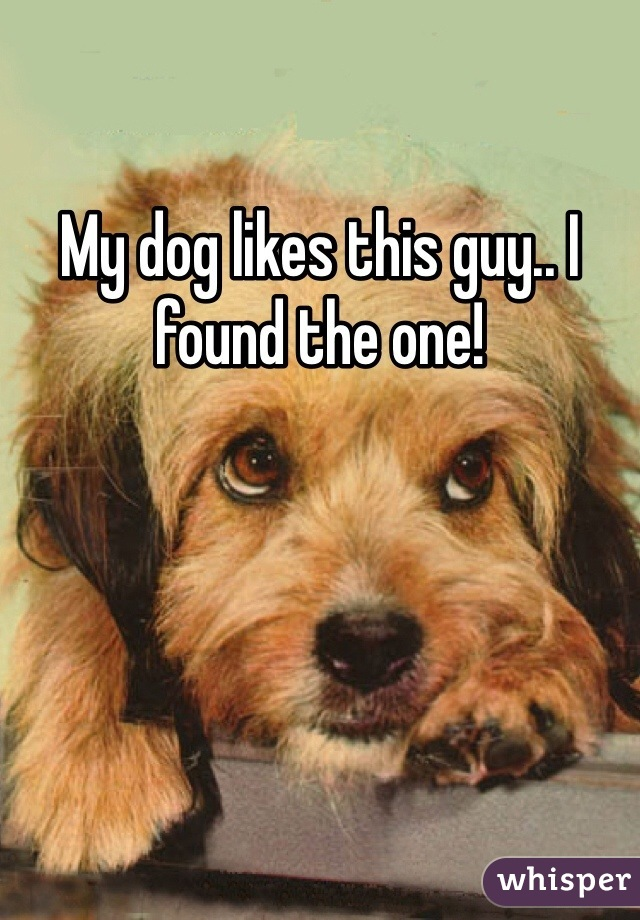 My dog likes this guy.. I found the one!
