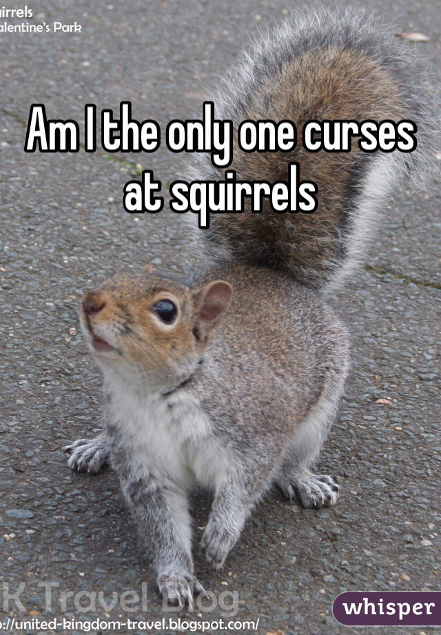 Am I the only one curses at squirrels