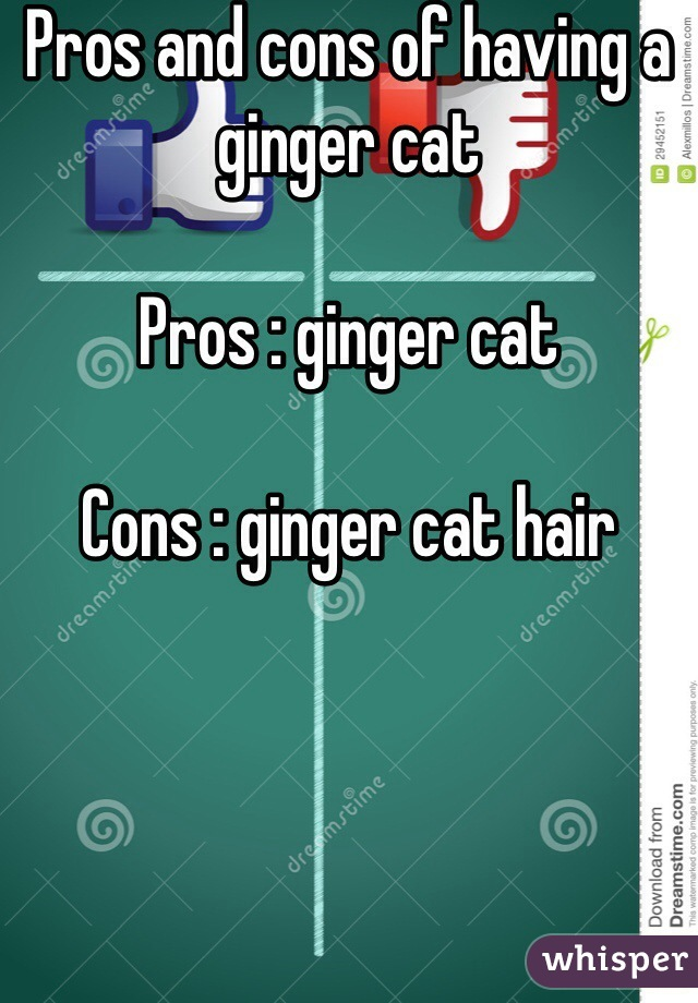 Pros and cons of having a ginger cat   Pros : ginger cat   Cons : ginger cat hair