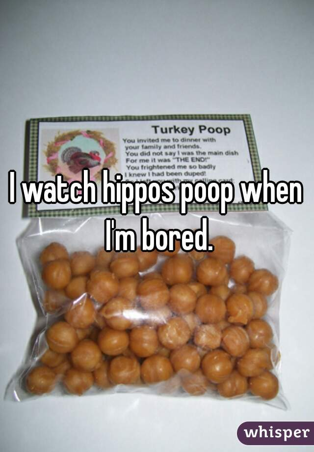 I watch hippos poop when I'm bored.