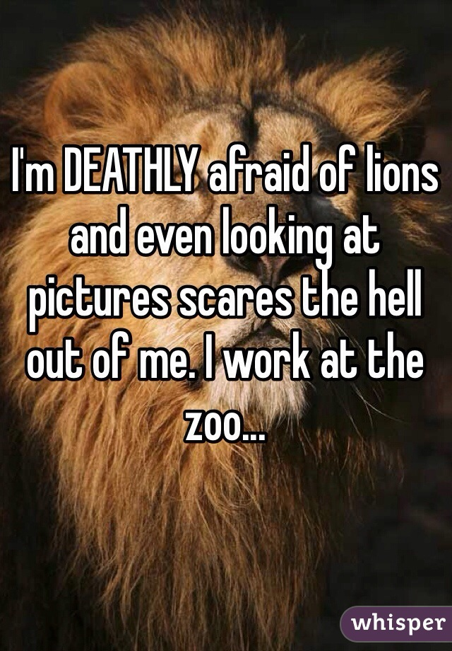 I'm DEATHLY afraid of lions and even looking at pictures scares the hell out of me. I work at the zoo...