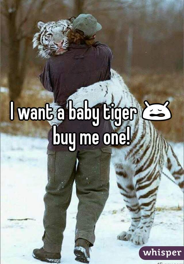 I want a baby tiger 😩 buy me one!