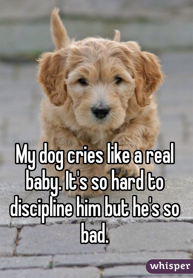 My dog cries like a real baby. It's so hard to discipline him but he's so bad.