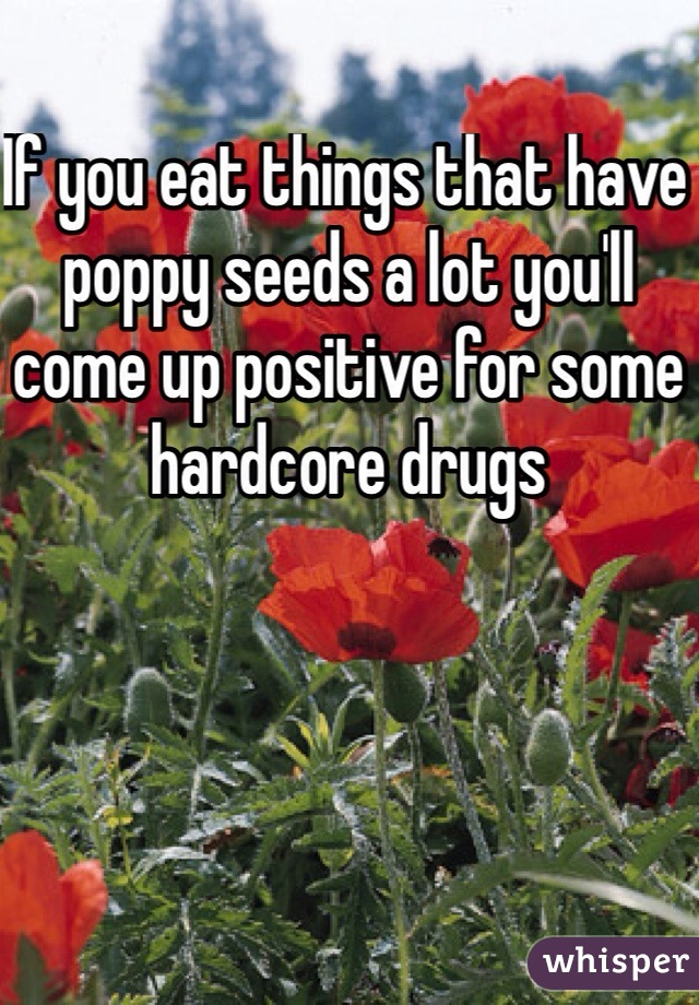 If you eat things that have poppy seeds a lot youll come up if you eat things that have poppy seeds a lot youll come up positive for mightylinksfo