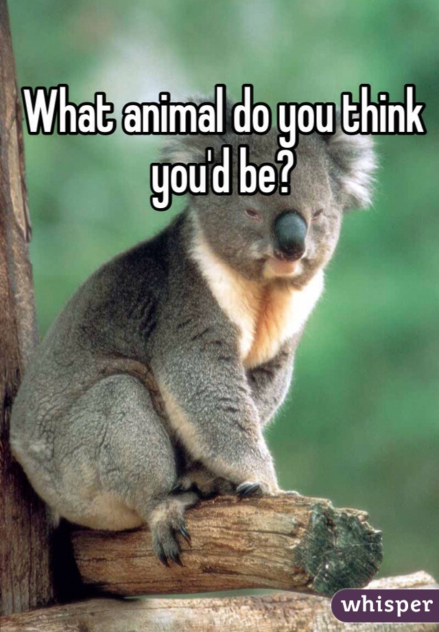 What animal do you think you'd be?