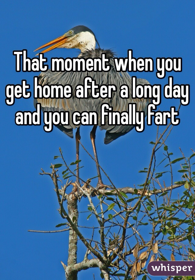 That moment when you get home after a long day and you can finally fart
