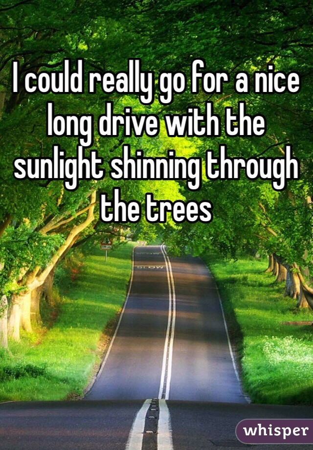 I could really go for a nice long drive with the sunlight shinning through the trees