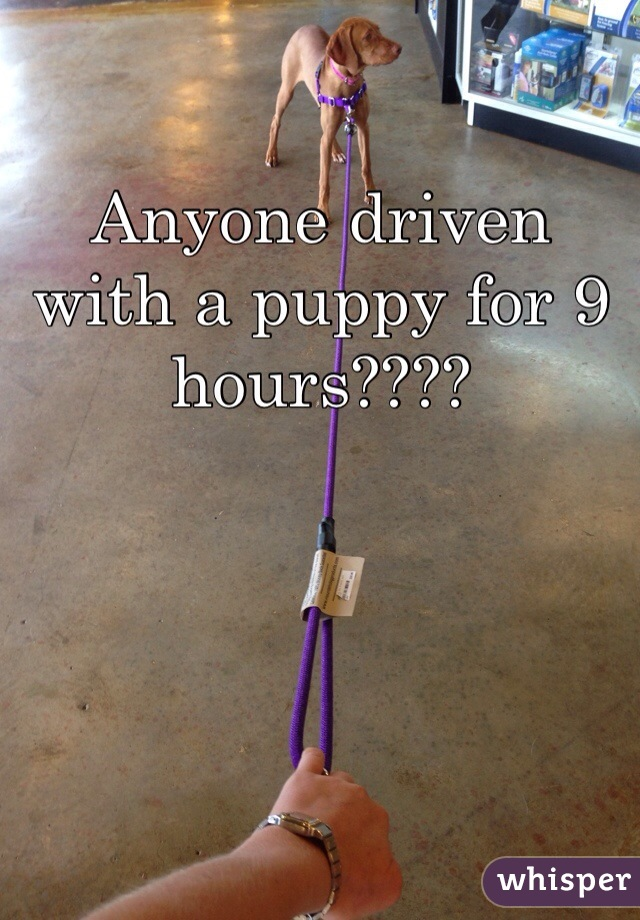 Anyone driven with a puppy for 9 hours????