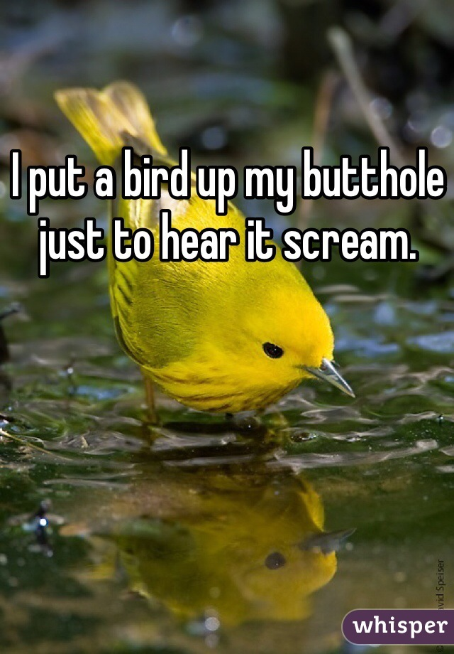 I put a bird up my butthole just to hear it scream.