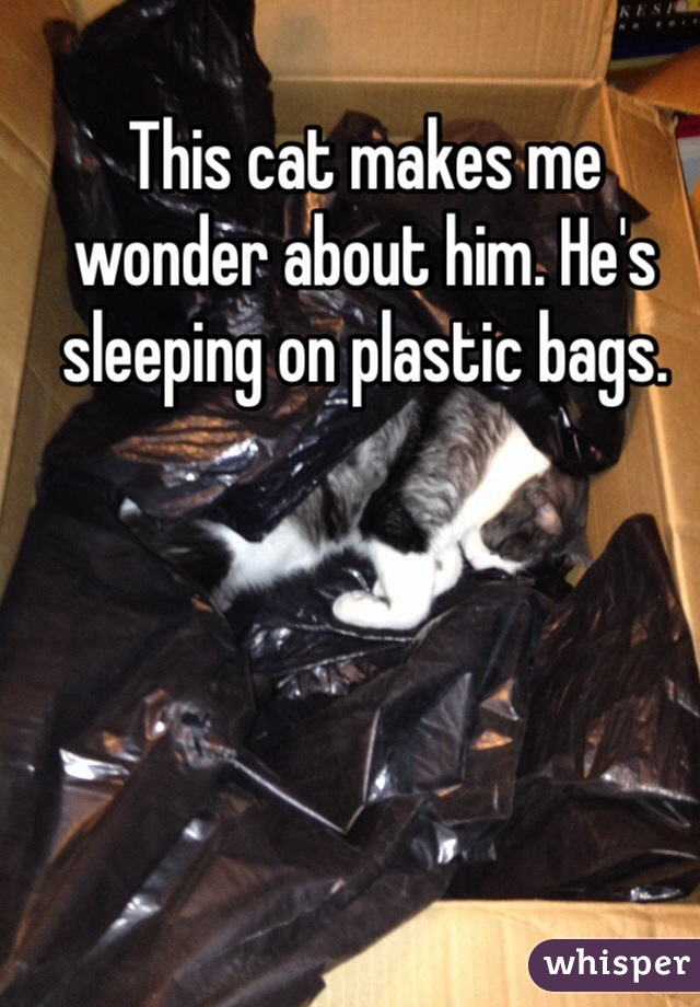 This cat makes me wonder about him. He's sleeping on plastic bags.