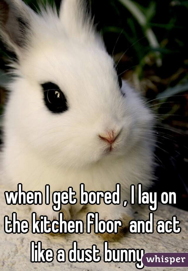 when I get bored , I lay on the kitchen floor  and act like a dust bunny ..