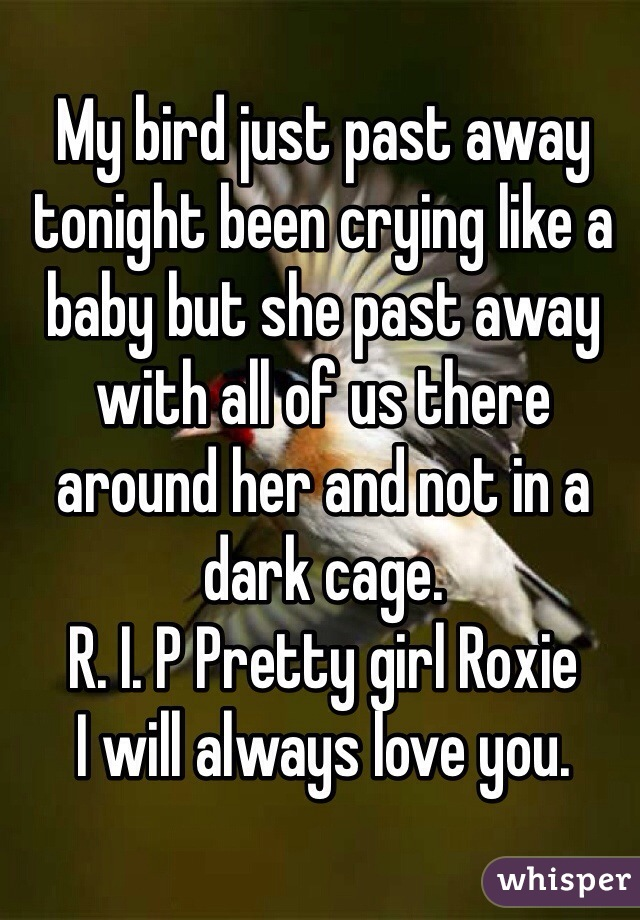 My bird just past away tonight been crying like a baby but she past away with all of us there around her and not in a dark cage.  R. I. P Pretty girl Roxie I will always love you.