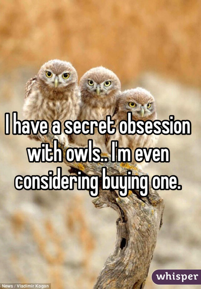 I have a secret obsession with owls.. I'm even considering buying one.
