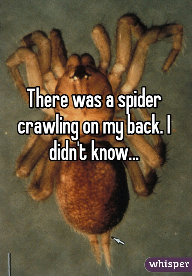 There was a spider crawling on my back. I didn't know...