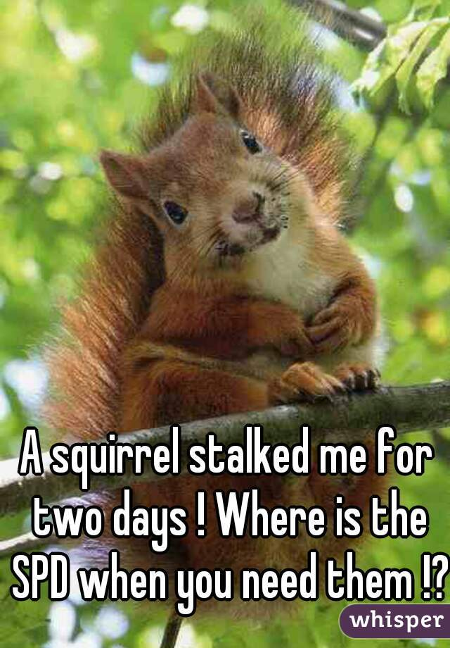 A squirrel stalked me for two days ! Where is the SPD when you need them !?
