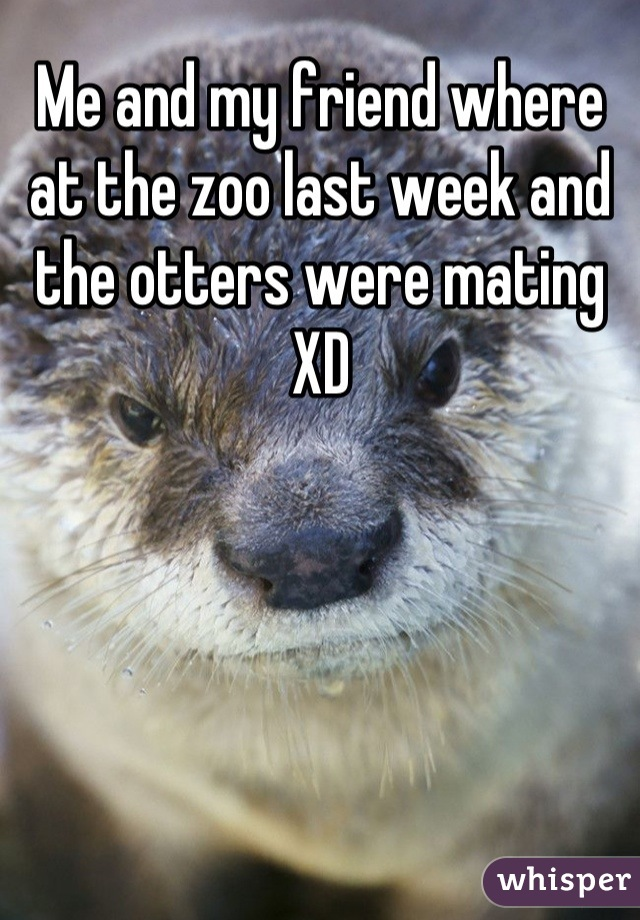 Me and my friend where at the zoo last week and the otters were mating XD