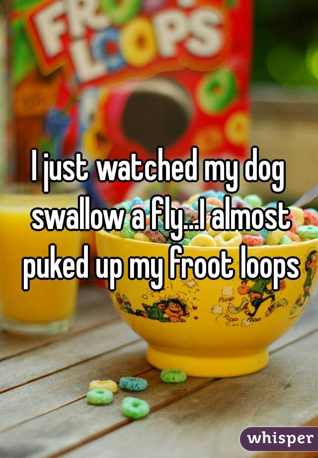I just watched my dog swallow a fly...I almost puked up my froot loops