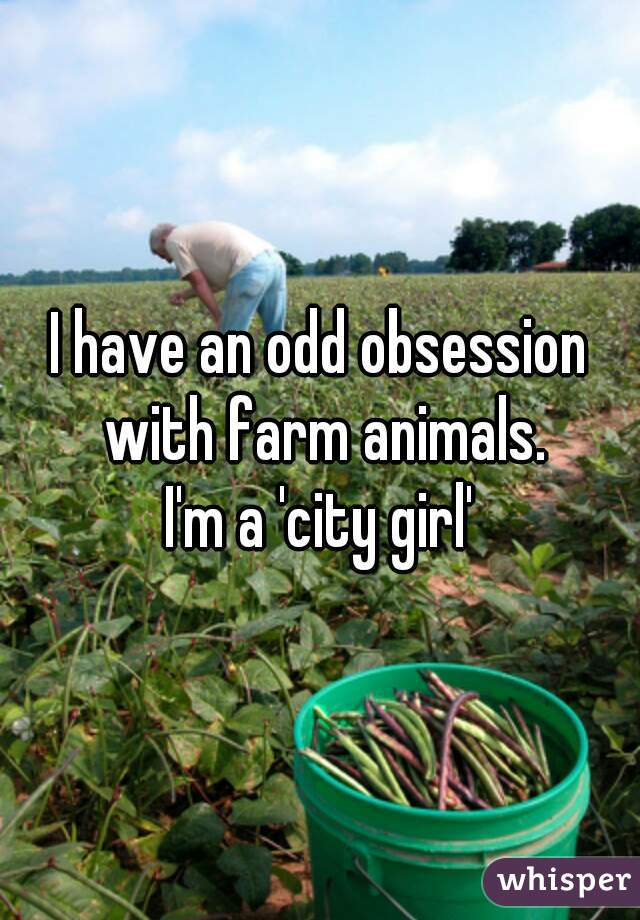 I have an odd obsession with farm animals.  I'm a 'city girl'