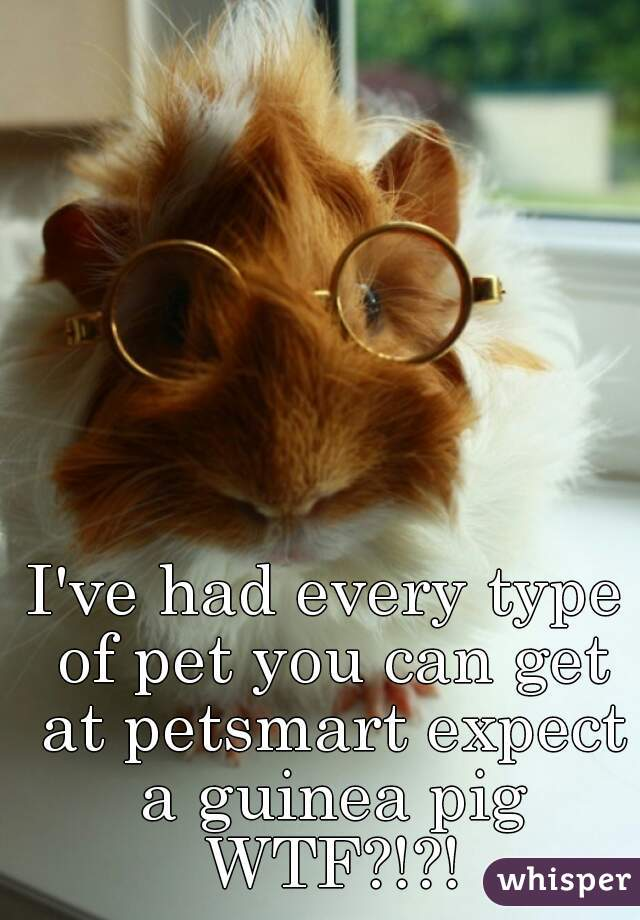 I've had every type of pet you can get at petsmart expect a guinea pig WTF?!?!
