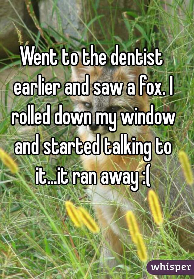 Went to the dentist earlier and saw a fox. I rolled down my window and started talking to it...it ran away :(