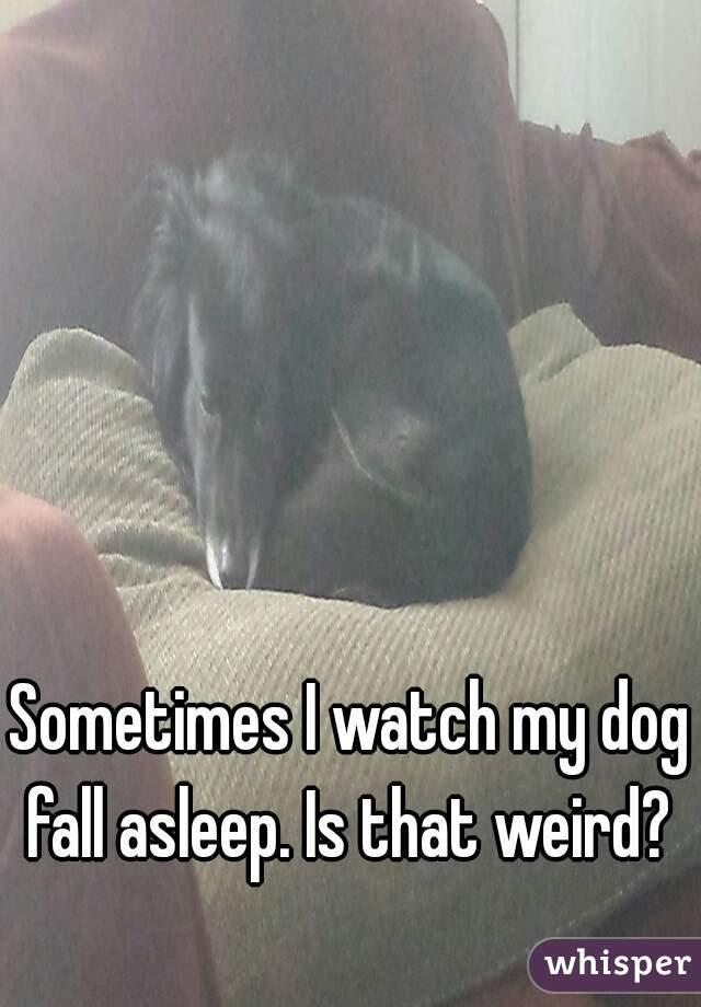 Sometimes I watch my dog fall asleep. Is that weird?