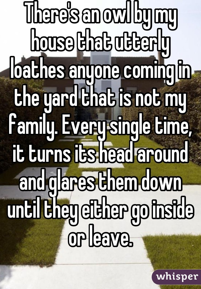 There's an owl by my house that utterly loathes anyone coming in the yard that is not my family. Every single time, it turns its head around and glares them down until they either go inside or leave.