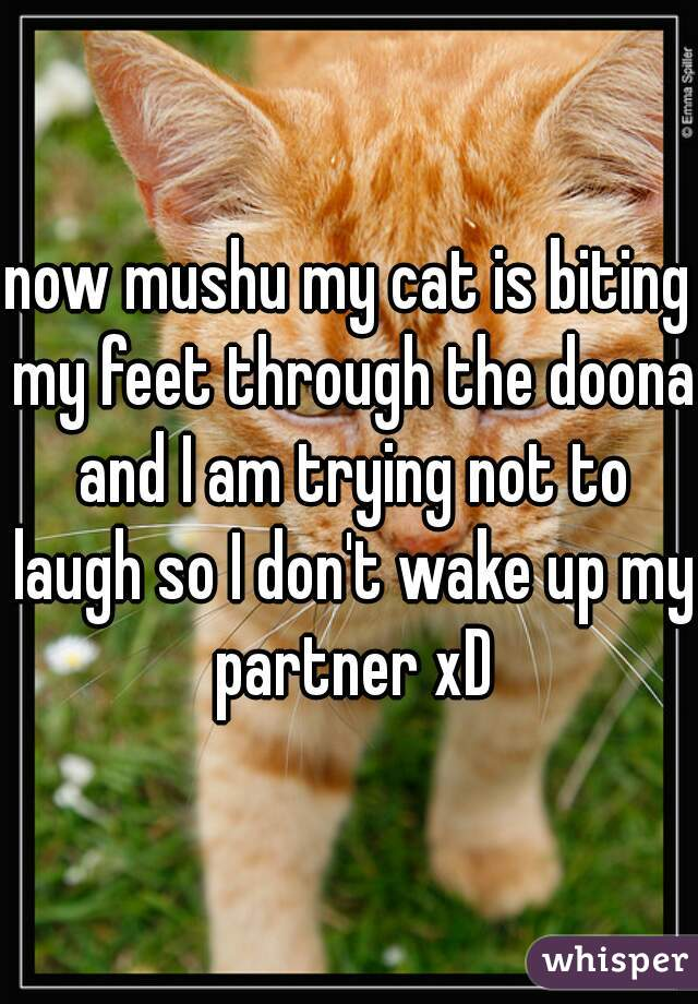 now mushu my cat is biting my feet through the doona and I am trying not to laugh so I don't wake up my partner xD