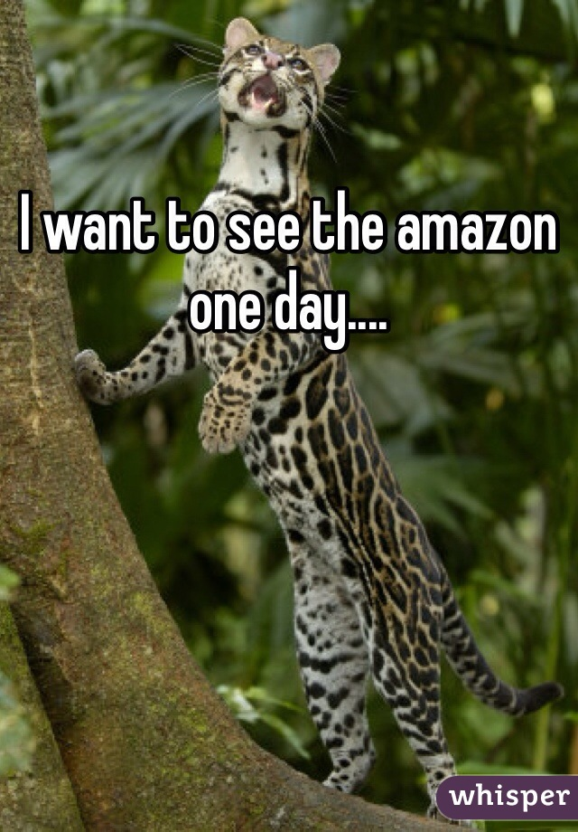 I want to see the amazon one day....