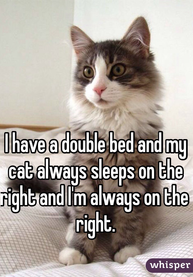 I have a double bed and my cat always sleeps on the right and I'm always on the right.