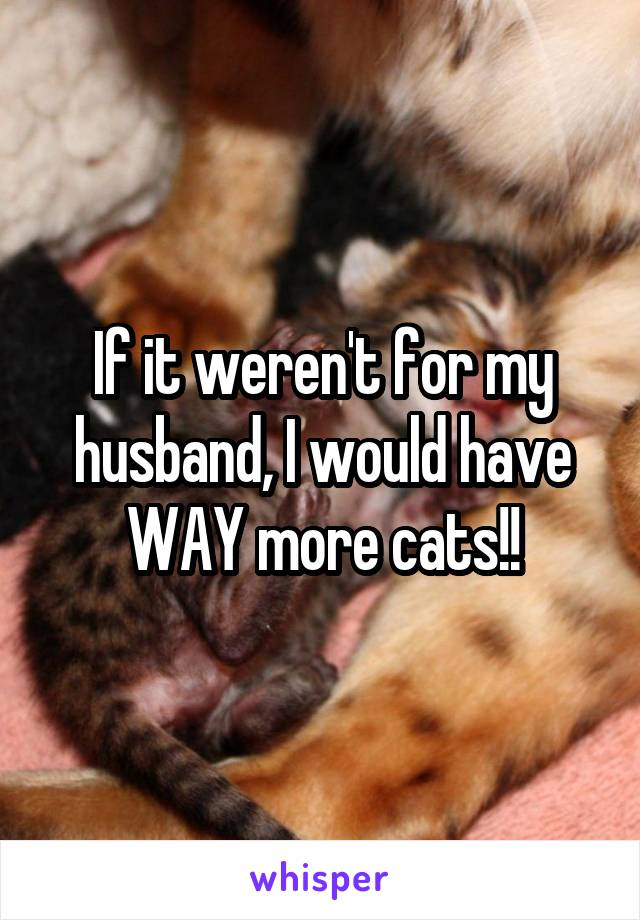If it weren't for my husband, I would have WAY more cats!!
