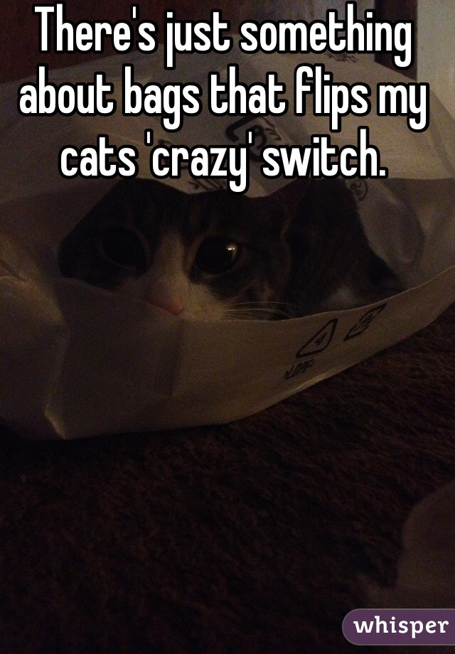 There's just something about bags that flips my cats 'crazy' switch.