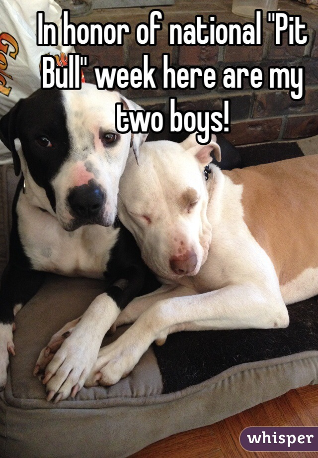 """In honor of national """"Pit Bull"""" week here are my two boys!"""