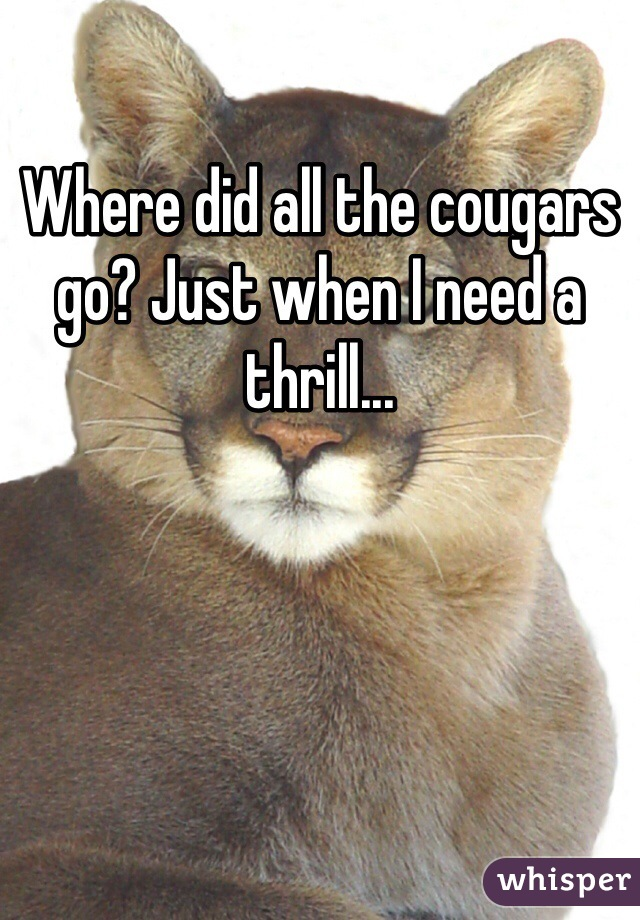 Where did all the cougars go? Just when I need a thrill...