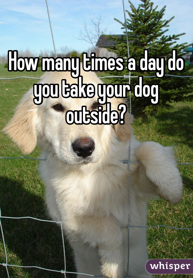 How many times a day do you take your dog outside?
