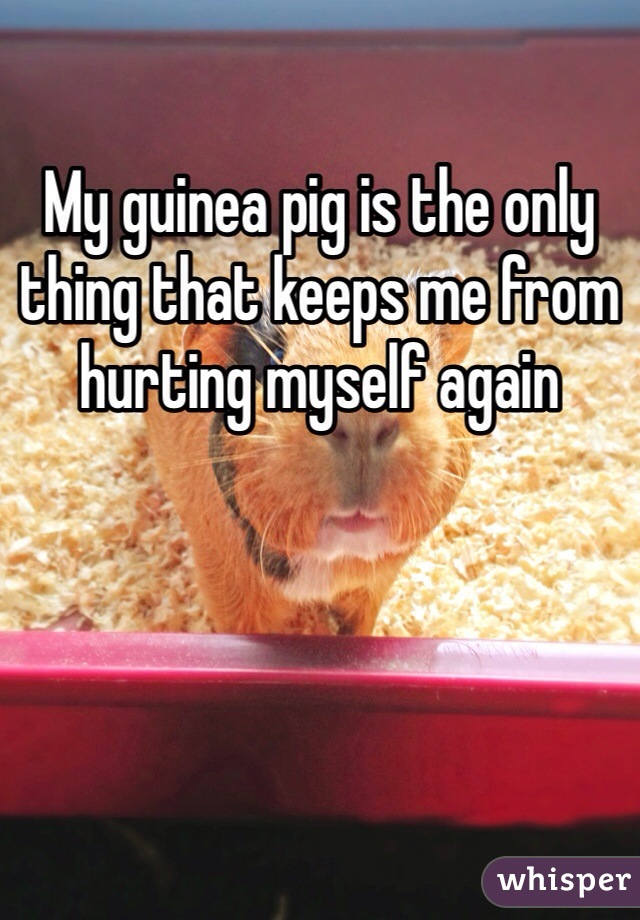 My guinea pig is the only thing that keeps me from hurting myself again