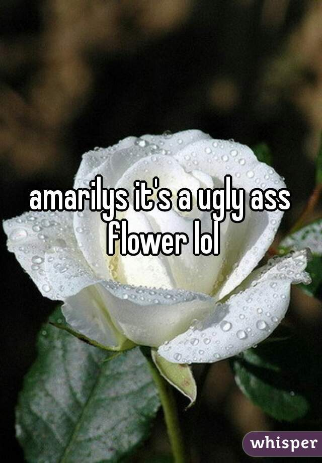 amarilys it's a ugly ass flower lol