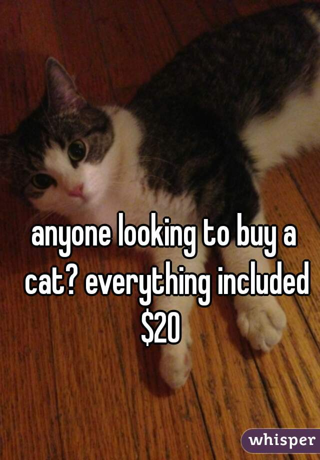 anyone looking to buy a cat? everything included $20
