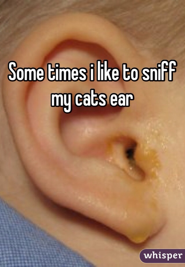 Some times i like to sniff my cats ear