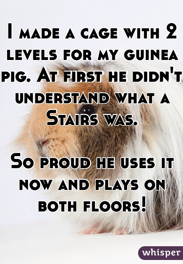 I made a cage with 2 levels for my guinea pig. At first he didn't understand what a Stairs was.  So proud he uses it now and plays on both floors!