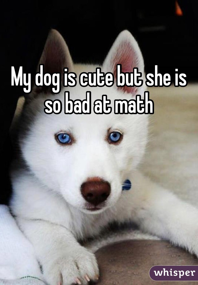 My dog is cute but she is so bad at math