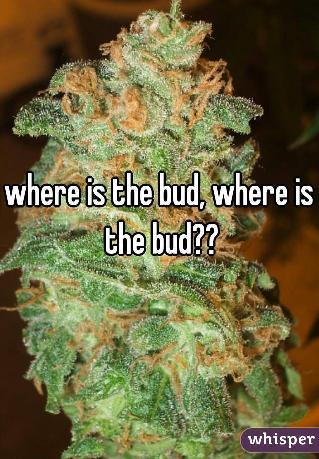 where is the bud, where is the bud??