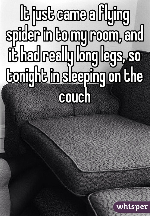 It just came a flying spider in to my room, and it had really long legs, so tonight in sleeping on the couch