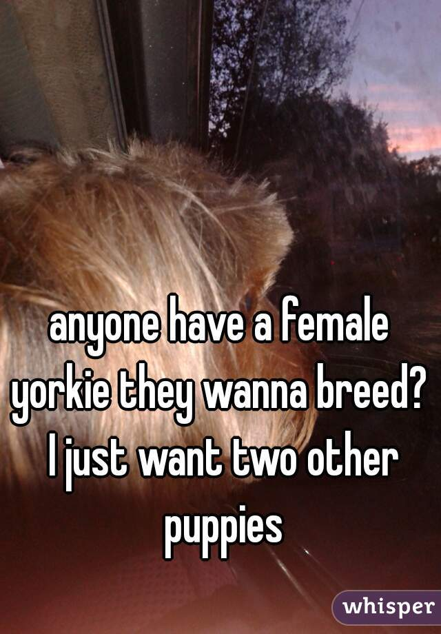 anyone have a female yorkie they wanna breed?  I just want two other puppies