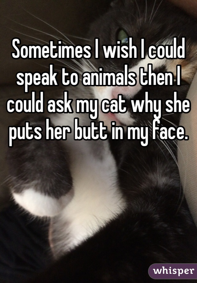 Sometimes I wish I could speak to animals then I could ask my cat why she puts her butt in my face.