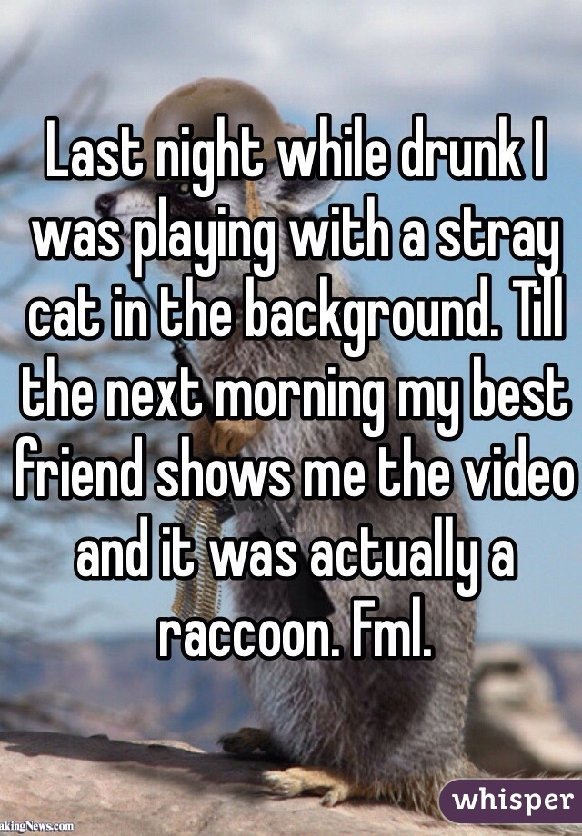 Last night while drunk I was playing with a stray cat in the background. Till the next morning my best friend shows me the video and it was actually a raccoon. Fml.